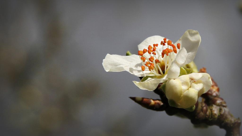 Une fleur par jour.... - Page 5 41545234.2b573a6d.1024