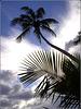 St.Lucia : un cielo tropicale -Botanical gardens