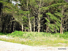 Forest Frontage.