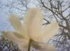 Spring Macro Pinhole Bokeh