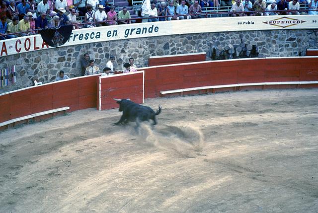 50 bullfight