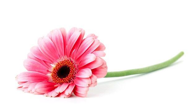 Sundays Flower... ©UdoSm