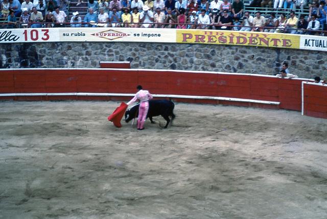 53 bull fight