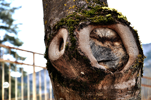 perplex tree
