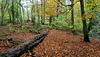 Overton Wood