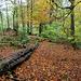 Overtoun Wood