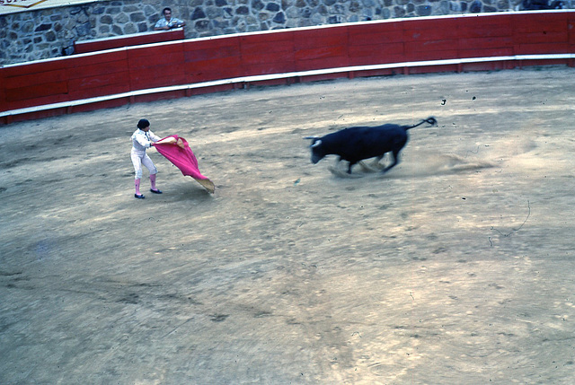51 bull fight