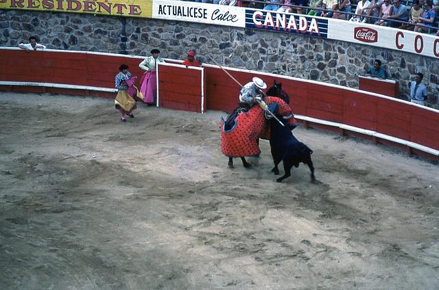 48  bull fight