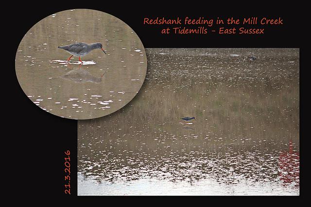 Redshank at Tidemills - 21.3.2016