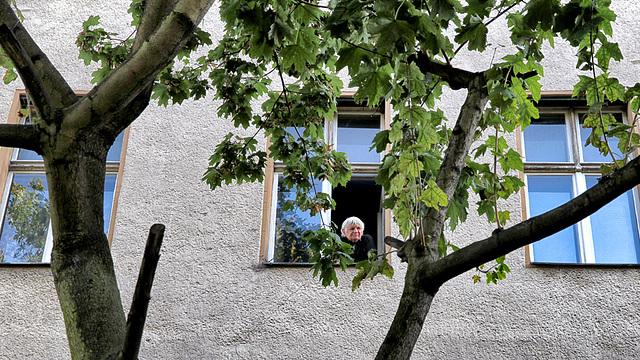 Vor meinem Fenster steht ein Baum