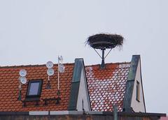 Storchenhorst mit Heimatfunk