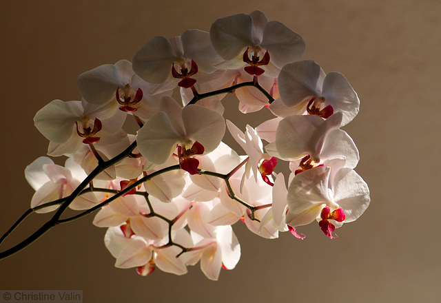 my orchids today!