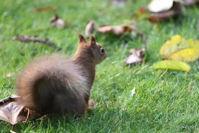 Where did I hide those nuts?