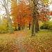 Walking path in Autumn 1