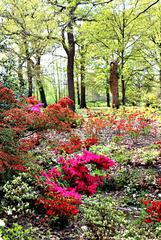Bushy Park in the spring