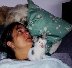 Cães, gatos e outros animais.