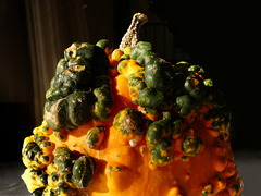 Zierkürbis orange-gelb-grün (3xPiP)