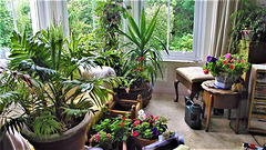 My bay window is full of plants and flowers
