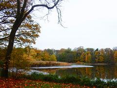 Herbst am Fischteich