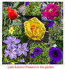 Garden Flowers Collage October 2018 - for H.A.N.W.E
