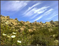 Granite, cistus and sky.