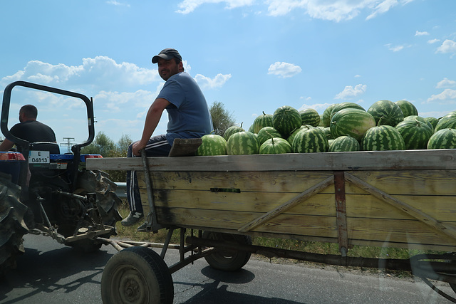 Watermelons, on the move