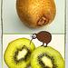 Kiwi on Kiwi... ©UdoSm