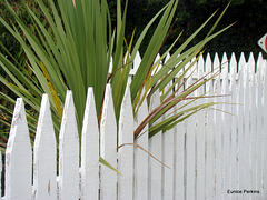 Our Fence