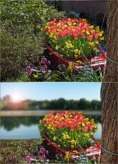 flower boat  ☼