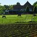 Fence Horses