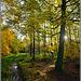 Autumn afternoon in Wykeham Forest, North Yorkshire