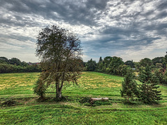 Late Summer Countryside