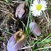 Acorns And A Daisy