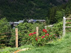Summer fence - HFF !