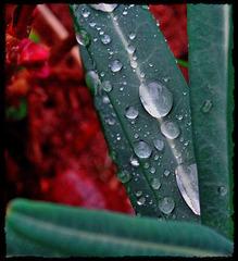 La pluie, cette artiste.... [ON EXPLORE] (clic sur photo)