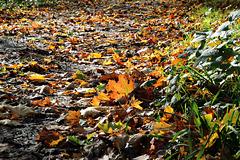 Über Herbstlaub gehen