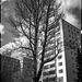 #20 A tall tree