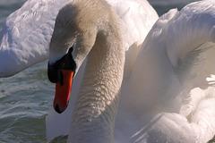 EOS 90D Unknown 14 21 33 13562 Swan dpp