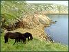 Dartmoor Ponies and a granite coast