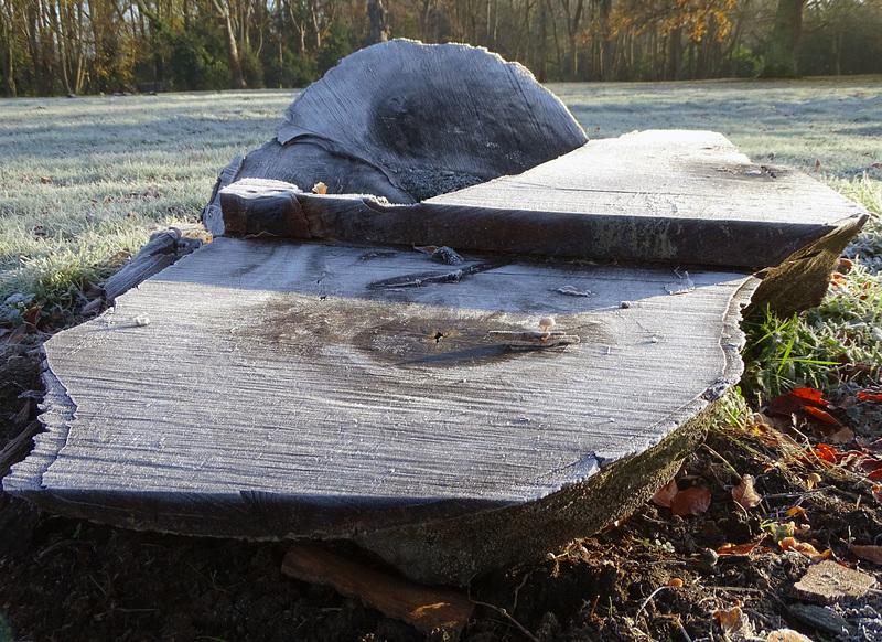 Cut log and fungi edited-1