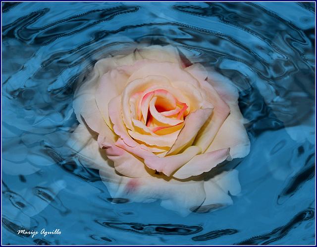 Rosa en la piscina