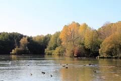 automne en demi teinte