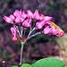 FlowerWithButterflyAlmost