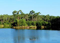 La photo actuelle de l'île aux aigrettes.