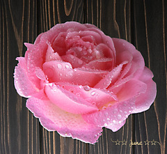 My favourite rose ;-)