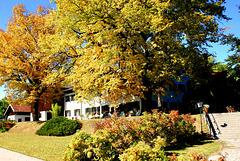 Herbstlaub an der alten Linde unter der schon König Ludwig II saß...  Autumn leaves on the old lime tree under which already King Ludwig II was... ©UdoSm