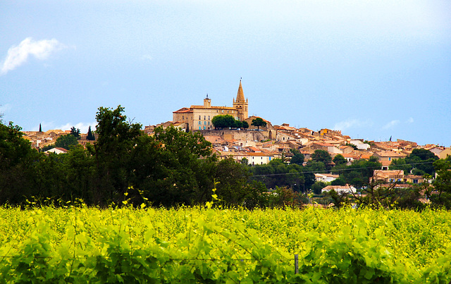 The Wealth of the South of France is the Wine: Quarante, Herault