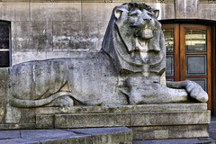 Lion Around – British Museum, Montague Place, Bloomsbury, London, England
