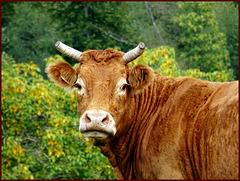Je ne suis pas vache................ [ON EXPLORE]
