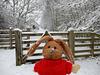 Happy snowy Fence Friday